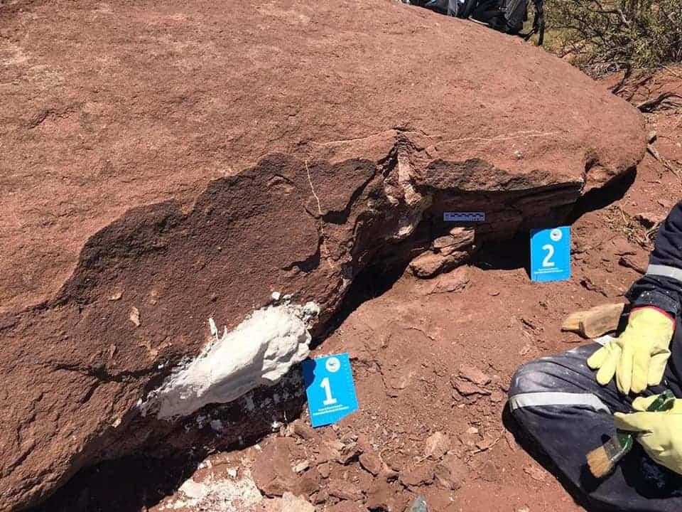 Argentina: encontraron restos fósiles de un dinosaurio herbívoro de hace 100 millones de años