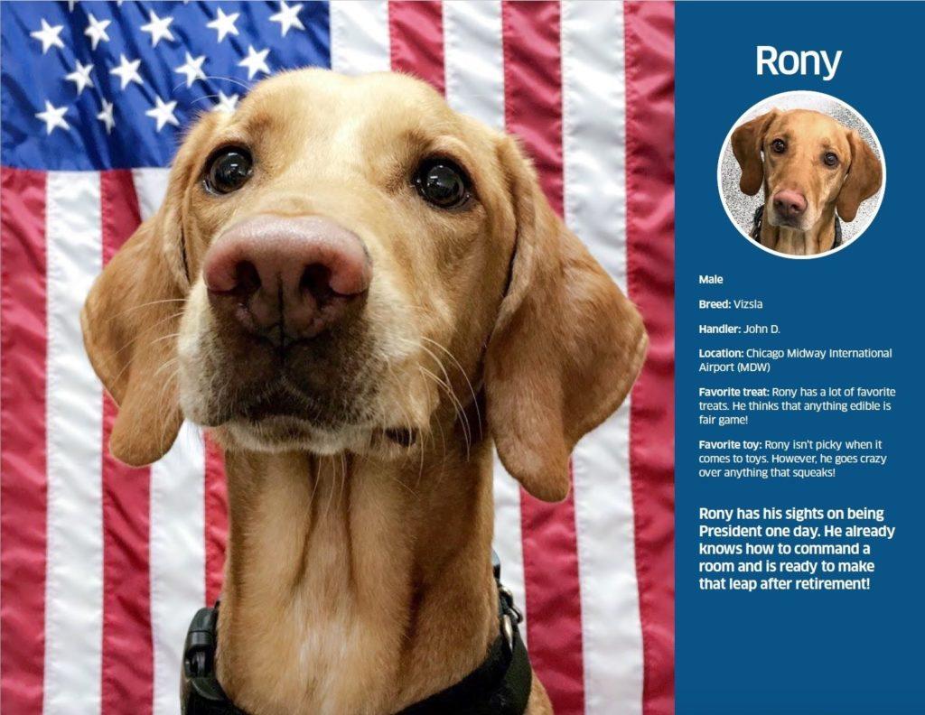 imagen Administración de Seguridad en el Transporte TSA dog calendar 2021 2