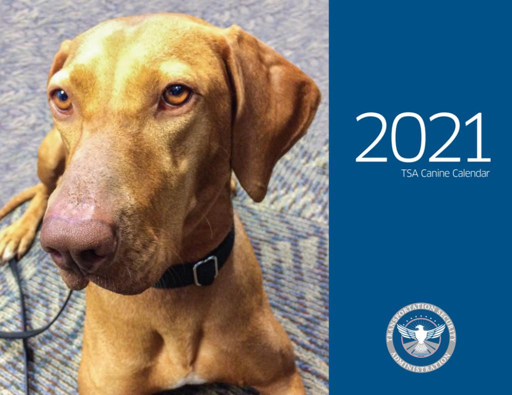 La Administración de Seguridad en el Transporte presenta su nuevo calendario canino 2021 con algunos de los perros de trabajo más lindos del aeropuerto