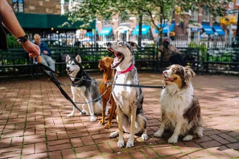 Desarrollan un collar para perros que le explica a su dueño qué es lo que quieren decir sus ladridos