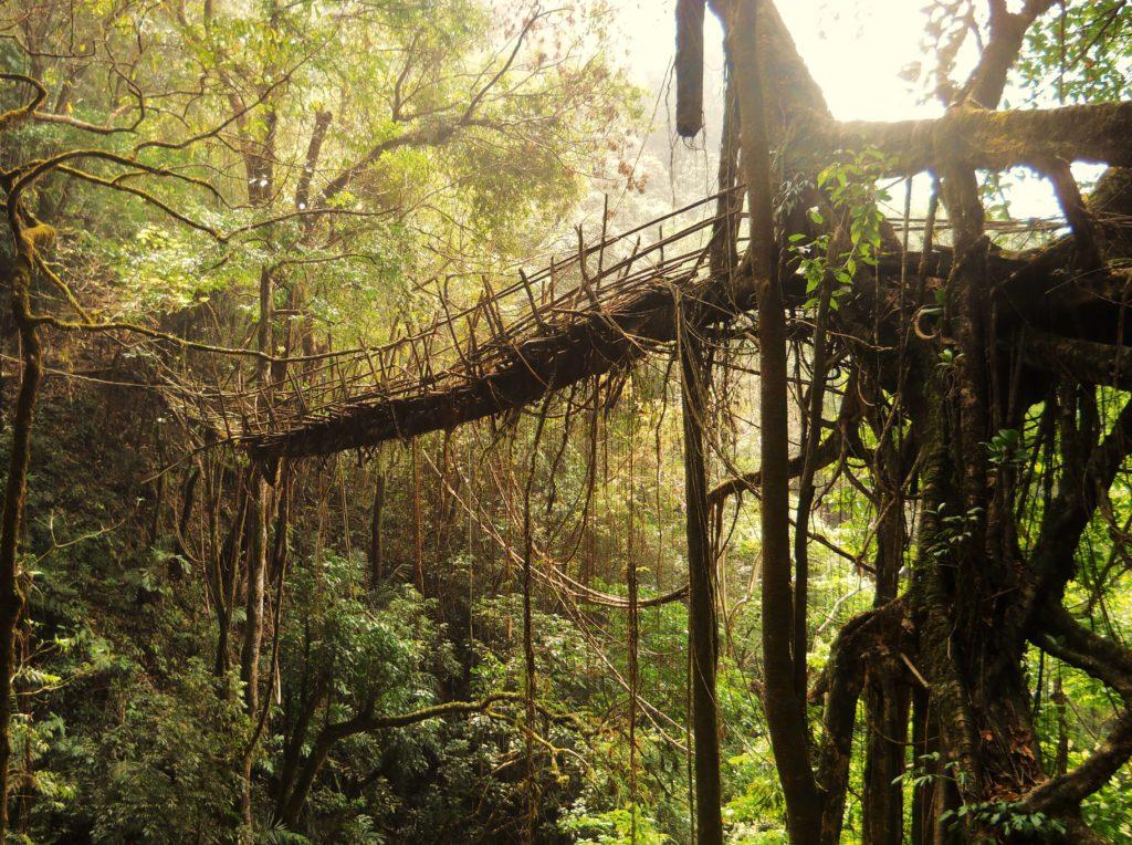 puentes vivientes