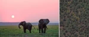 Científicos utilizan imágenes satelitales para contar los elefantes del continente africano