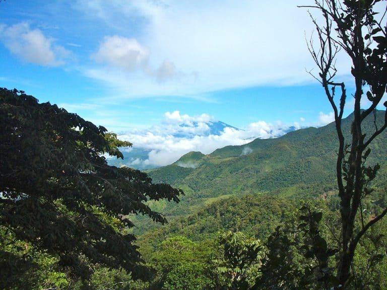 bosque panamá