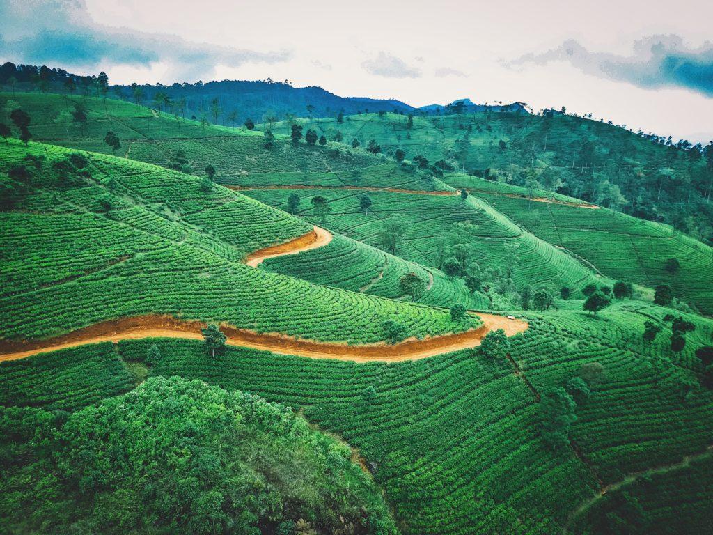 Sri Lanka reabre sus fronteras y vuelve a recibir a turistas de todo el mundo