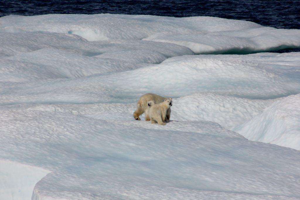 El Departamento de Defensa de Estados Unidos declaró el cambio climático como un 'problema de seguridad nacional'