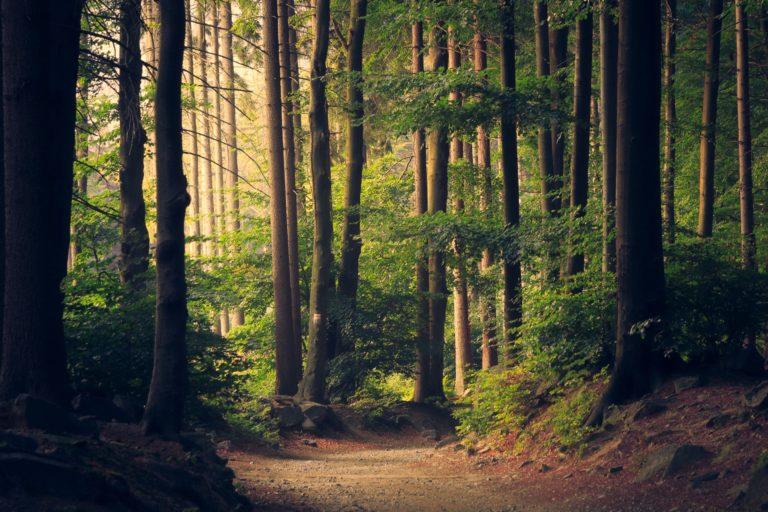 La compañía sueca Ikea compró alrededor de 4.000 hectáreas de bosque para protegerlas en términos de desarrollo