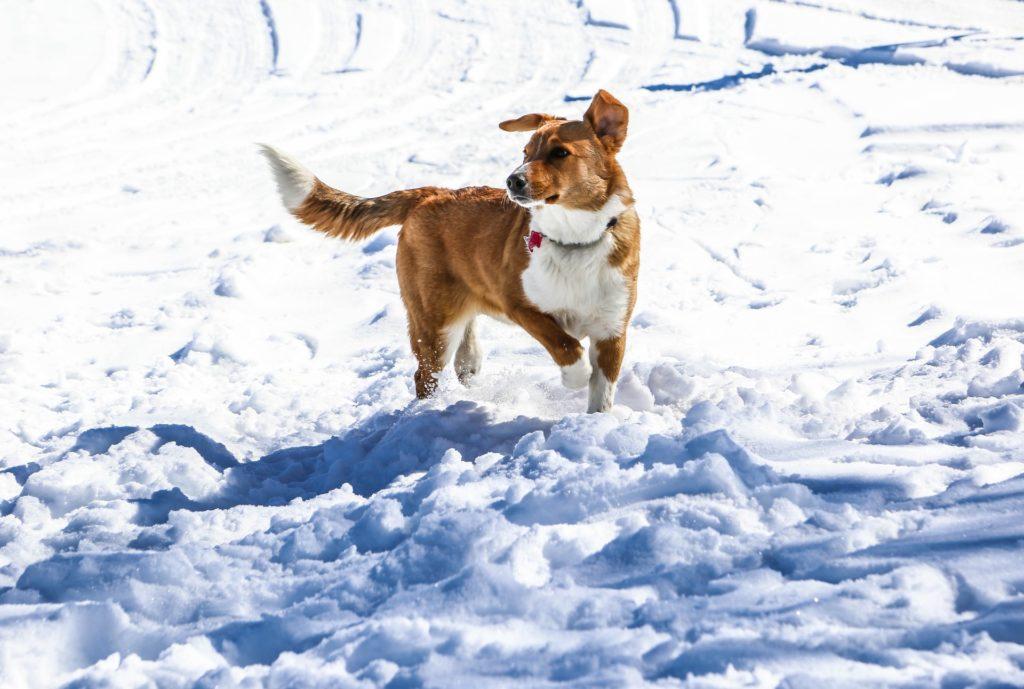 Dos personas quedaron atrapadas en un avalancha y fueron rescatadas gracias a sus perros