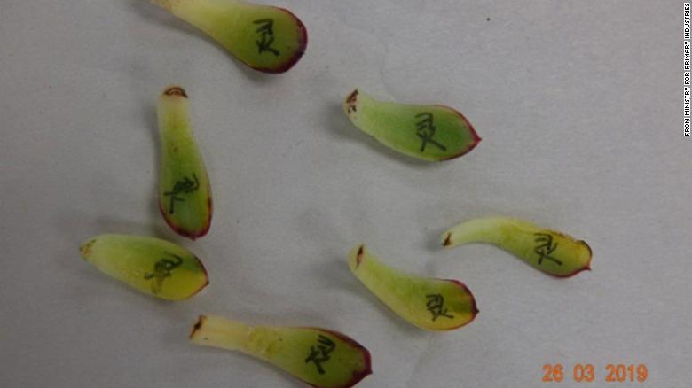 Una mujer fue condenada por intentar ingresar casi 1.000 cactus y suculentas a Nueva Zelanda