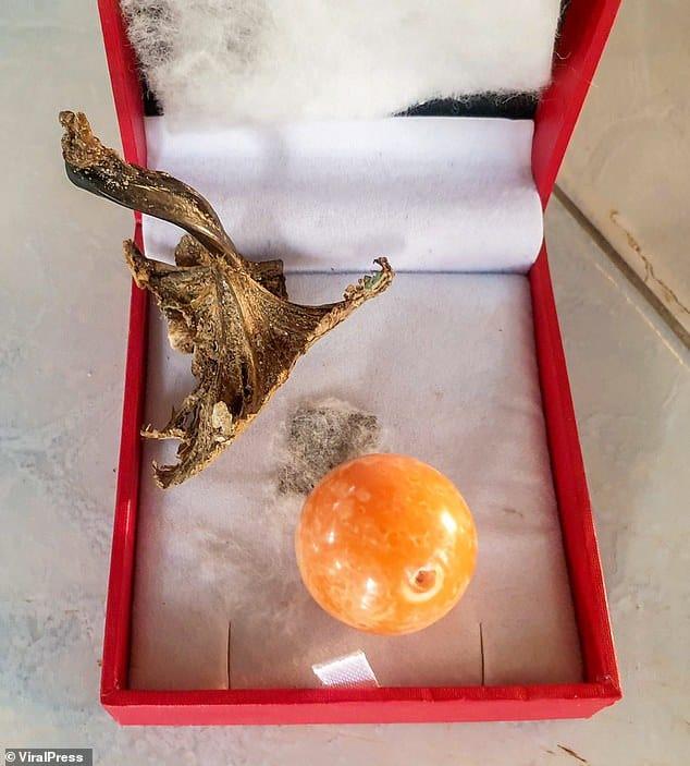 Un pescador tailandés fue a la playa y encontró una perla valuada en unos 300.000 dólares