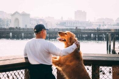 Ciudades para visitar con tu mascota