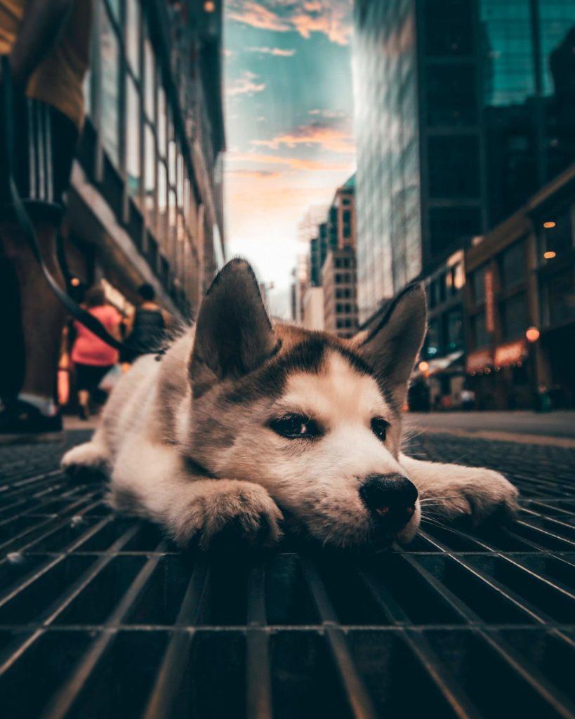 ciudades para visitar con tu mascota yeshi kangrang ynuqoz2pST0 unsplash 1
