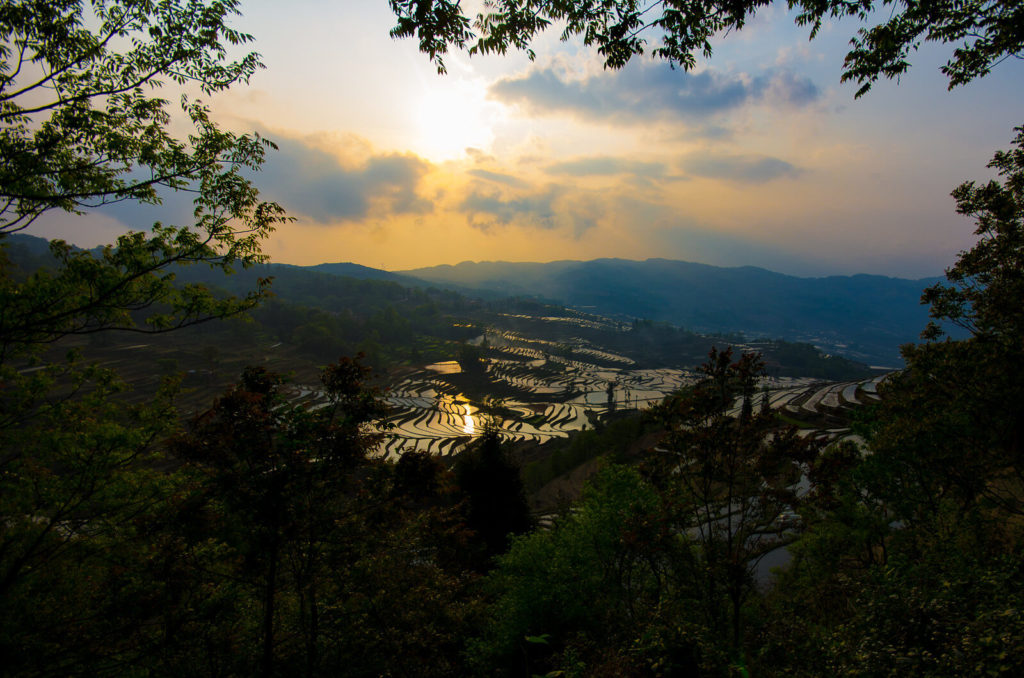 terrazas de arroz de Yuanyang 42514282011 732f95203a h 1