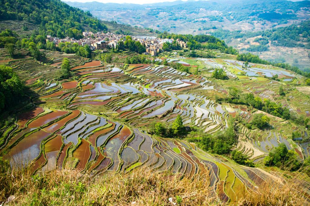 terrazas de arroz de Yuanyang 40706191130 64d4739d6f h 1