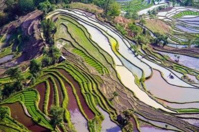 Terrazas de Arroz de Yuanyang