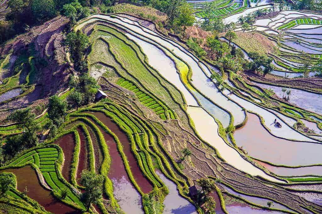 terrazas de arroz de Yuanyang 8638452931 df2a4b5dd6 b 1