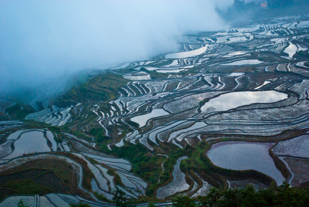 terrazas de arroz de Yuanyang 7887236406 f3aad6e1a9 k 1
