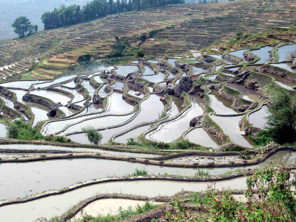 terrazas de arroz de Yuanyang 48640183052 e499798d2f b 1