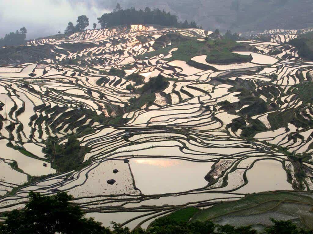 terrazas de arroz de Yuanyang 48639450842 49318576da b 1