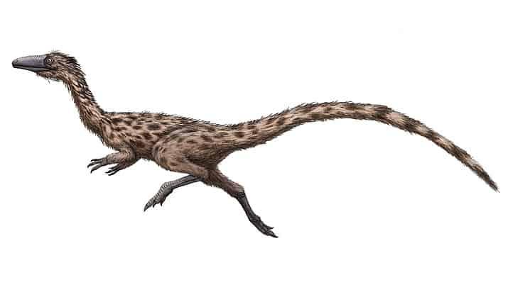 Massachusetts presentó un proyecto de ley para nombrar a un dinosaurio estatal oficial y el 'Podokesaurus holyokensis' fue el elegido