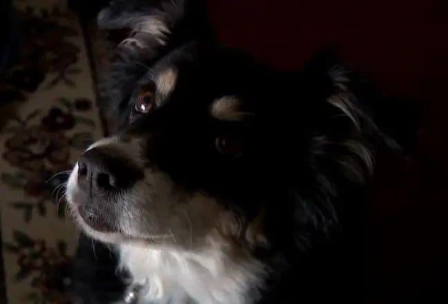 Un hombre le dejó una herencia millonaria a su perra en su testamento antes de fallecer
