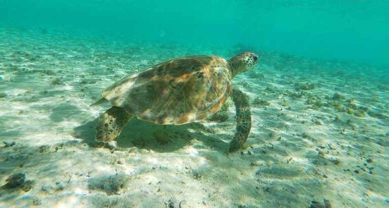 Alrededor de 5.000 tortugas marinas fueron rescatadas en Texas debido a la fuerte ola de frío