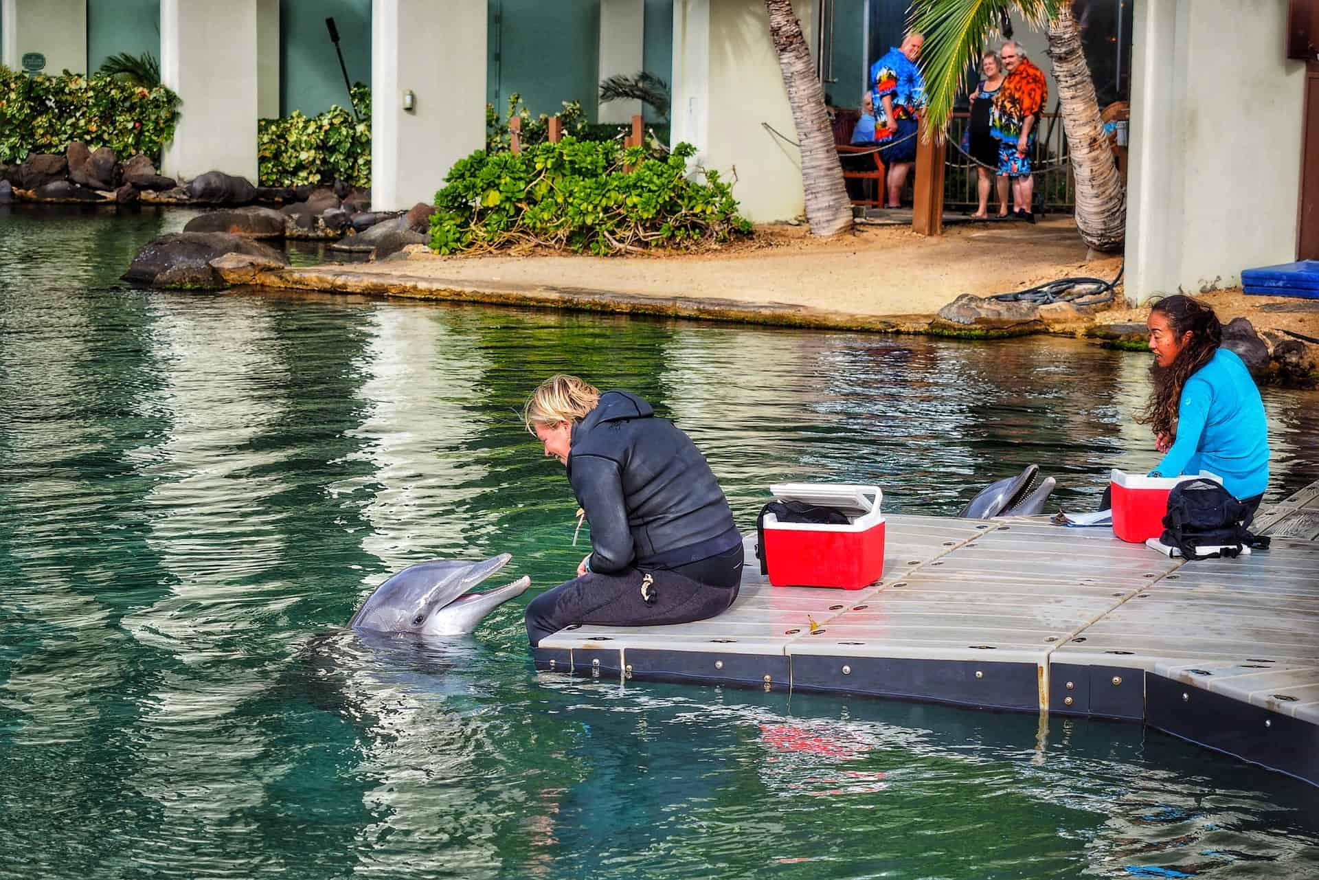 Un nuevo estudio sostiene que los delfines tienen rasgos de personalidad similares a los humanos
