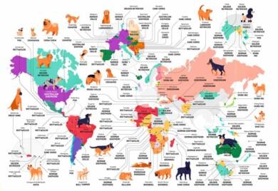 mapa perros 1
