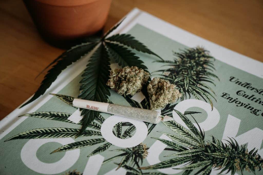 El Estado De Nueva Jersey, Estados Unidos, Legalizó El Consumo Recreativo De Marihuana Para Mayores De 21 Años