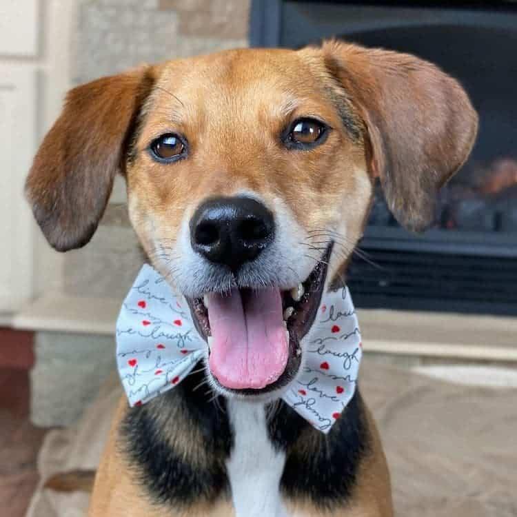 Este Adorable Beagle Sobrevivió Al Abuso De Sus Primeros Cuidadores Y Ahora Protagoniza Un Tierno Libro Infantil