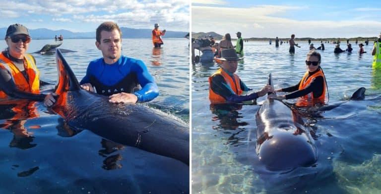 Logran rescatar a decenas de ballenas que habían quedado varadas en una playa de Nueva Zelanda