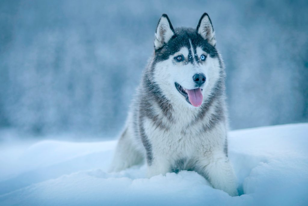 Encuentran restos de un perro que vivió hace más de 10 mil años, sería el más antiguo de toda América