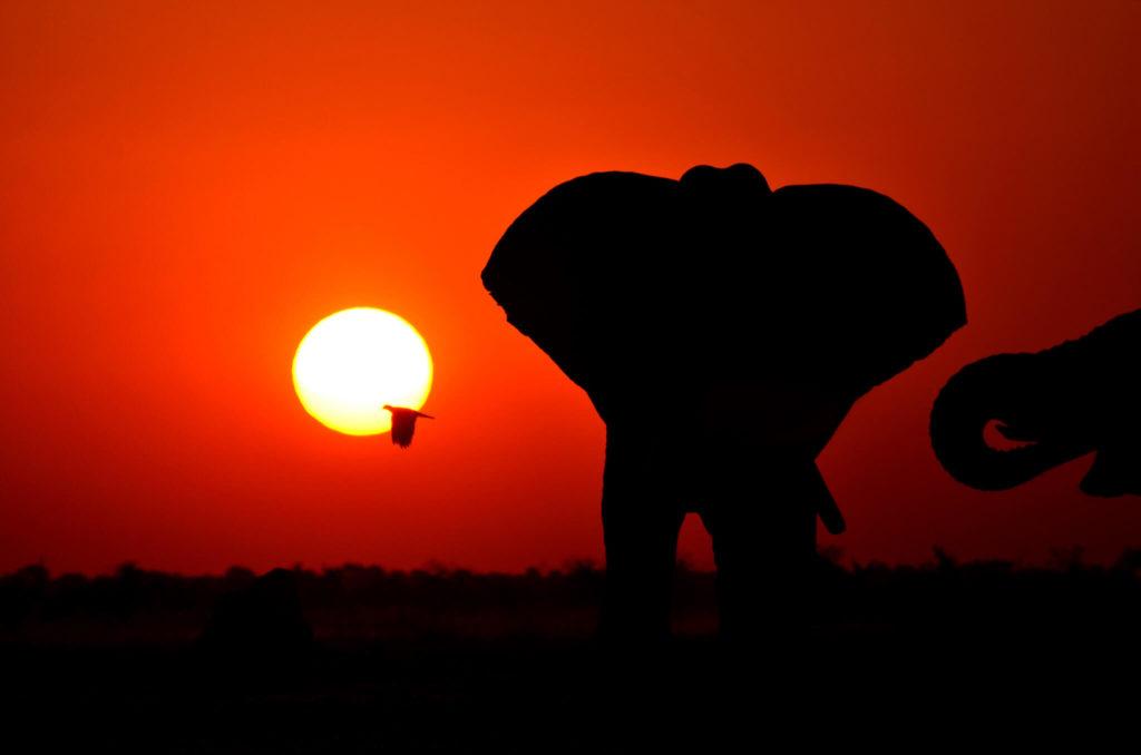 Imagen Lugares Para Visitar En Botswana 49058378561 5A4F0A0Fc6 K 1
