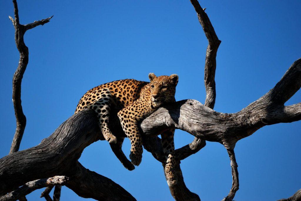 Imagen Lugares Para Visitar En Botswana Colin Watts J80D6Rzklz0 Unsplash 1