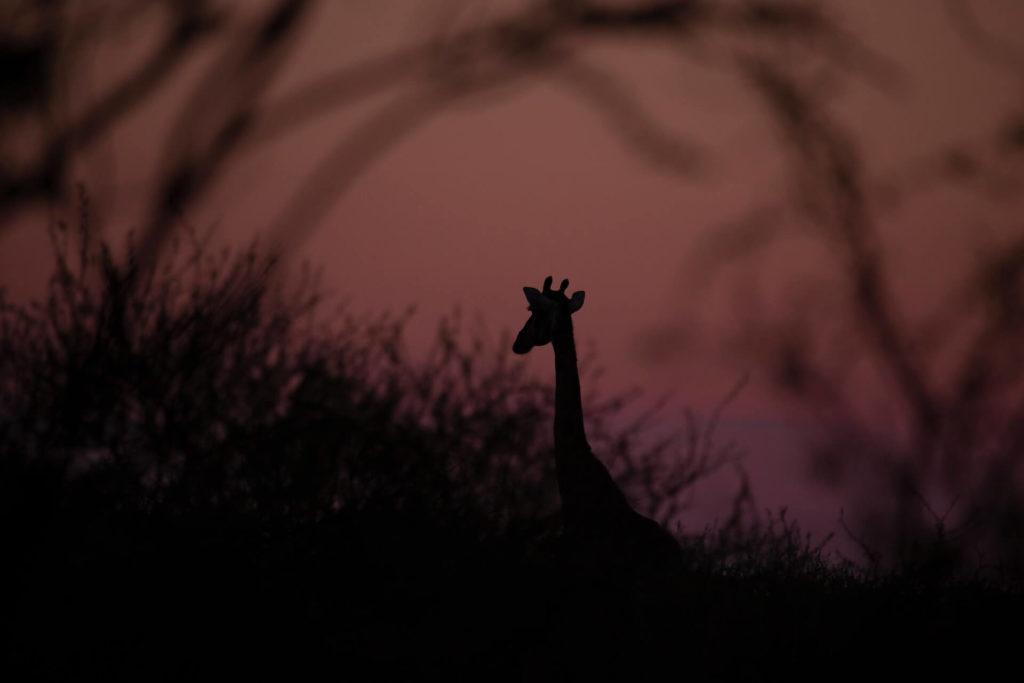 Imagen Lugares Para Visitar En Botswana Luigi Liccardo Gwe7Hixp5Di Unsplash 1