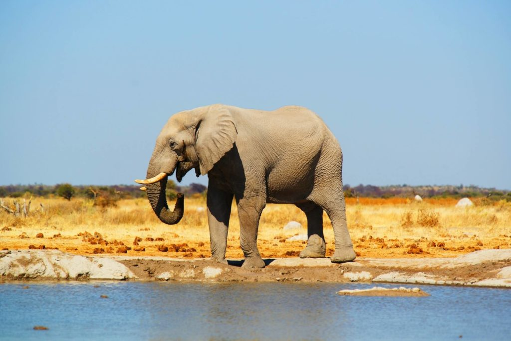 Imagen Lugares Para Visitar En Botswana Jager Dq8 Qraoz6U Unsplash 1