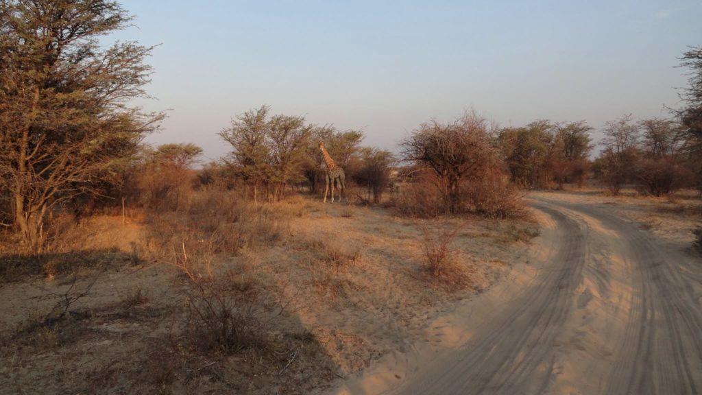 Imagen Lugares Para Visitar En Botswana 48591184591 912E3Aad7D K 1