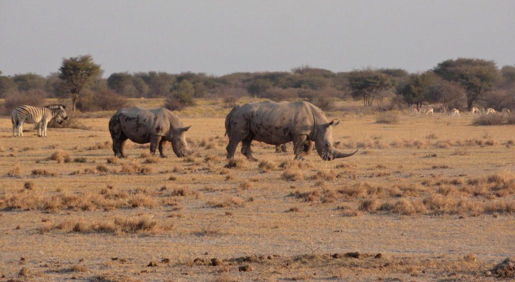 Imagen Lugares Para Visitar En Botswana 48591335612 14472B34E5 K 1