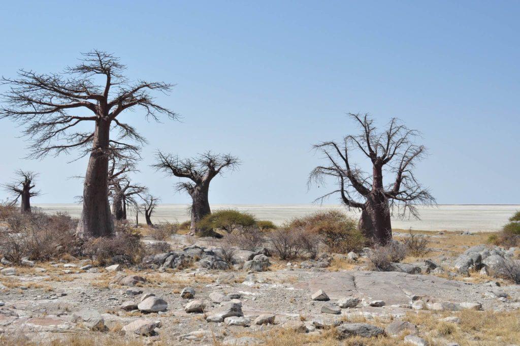 Imagen Lugares Para Visitar En Botswana 4954704963 1Eef6107F1 K 1