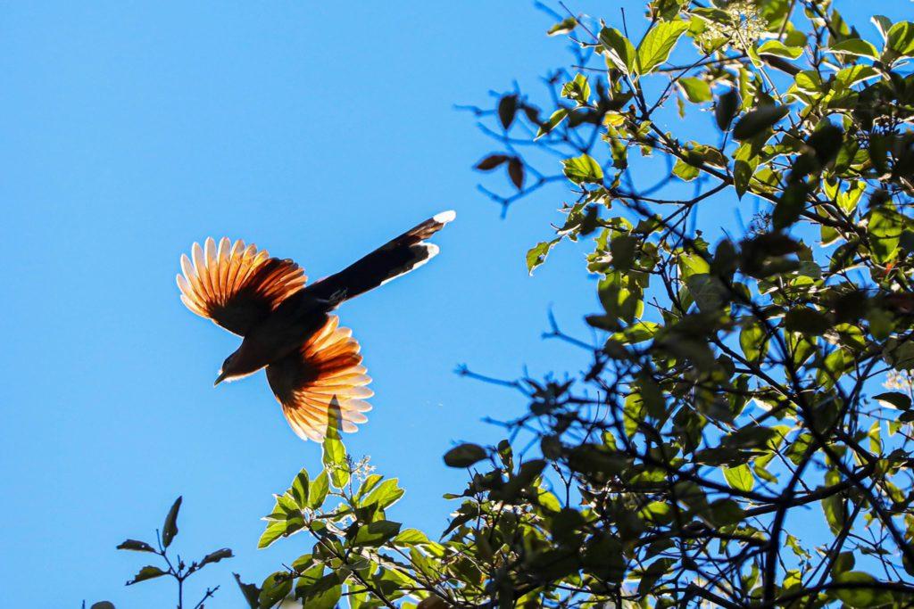 Imagen Parques Naturales Urbanos Costa Rica 3