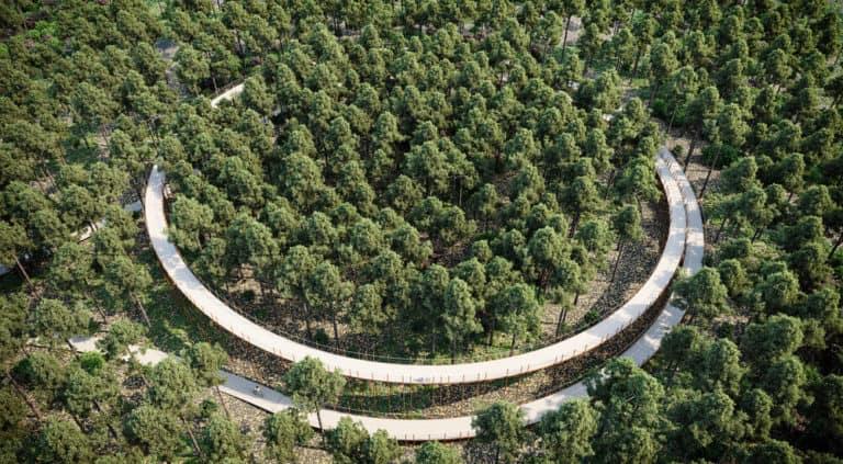 Ciclismo a través de los árboles