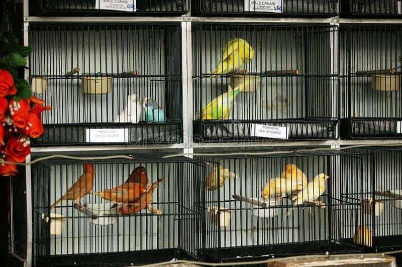 aves-en-jaula-mercado-de-isla-la-ciudad-parís-196848056