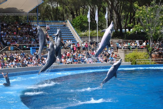 Un Estado Australiano Prohíbe Los Shows Con Delfines A Través De Una Ley Que Pone Fin A La Cría En Cautiverio