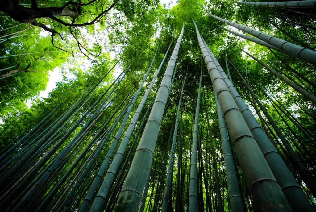 Arashiyama eleonora albasi fSAyrw46Tx4 unsplash 1