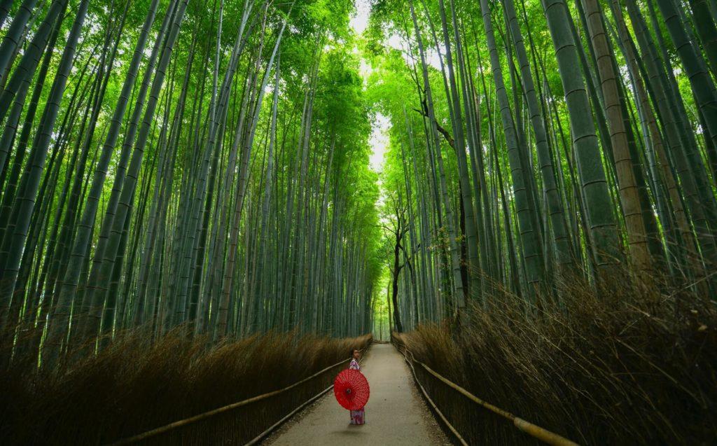 Arashiyama walter mario stein kqfE9mvv7Xw unsplash 1