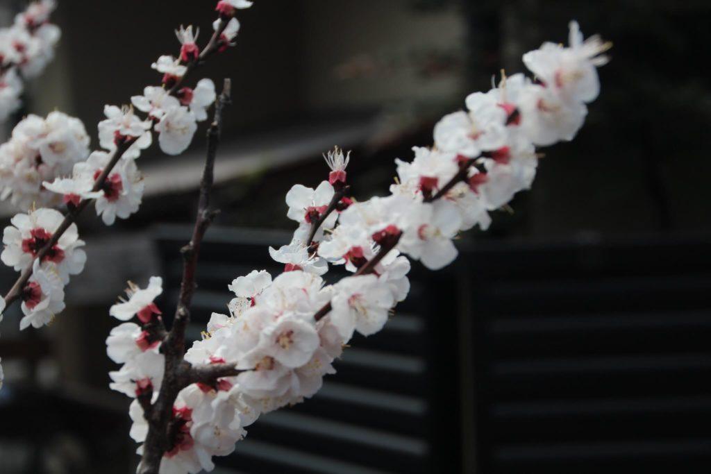 Arashiyama 26081036372 26c1375d25 k 1