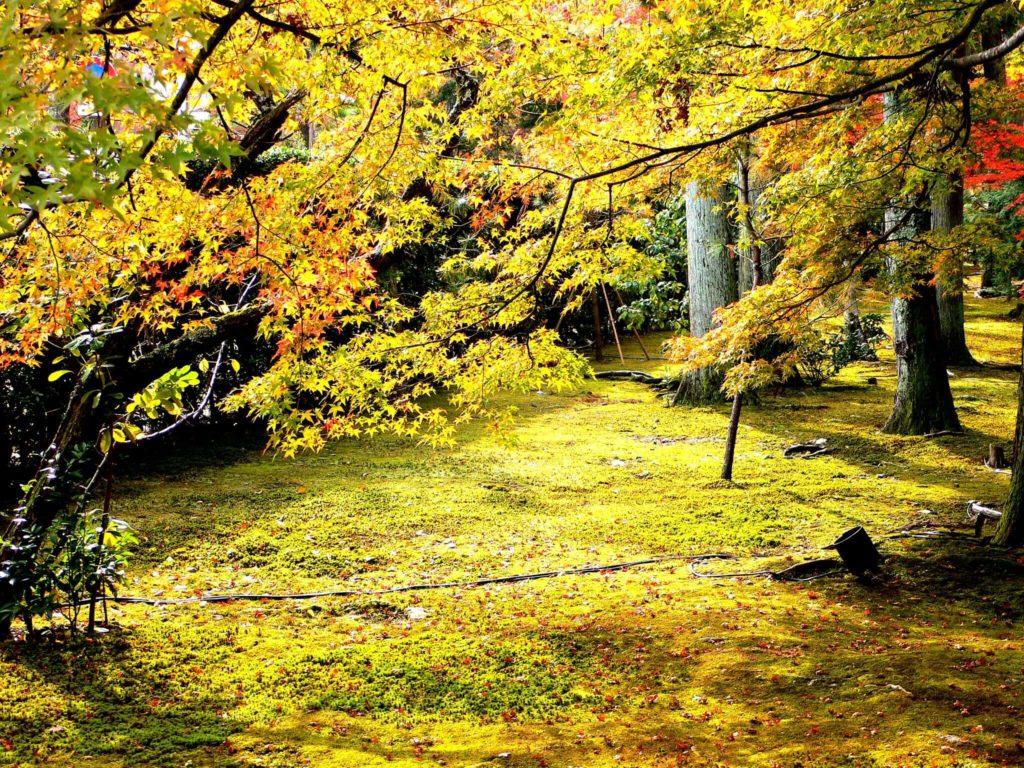 Arashiyama 303360329 074ec6b5e3 k 1