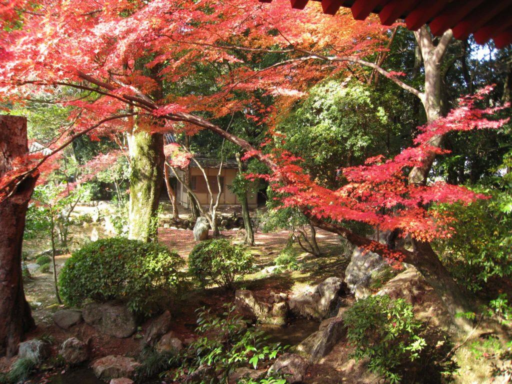 Arashiyama 2320059987 ea67f0fde6 k 1