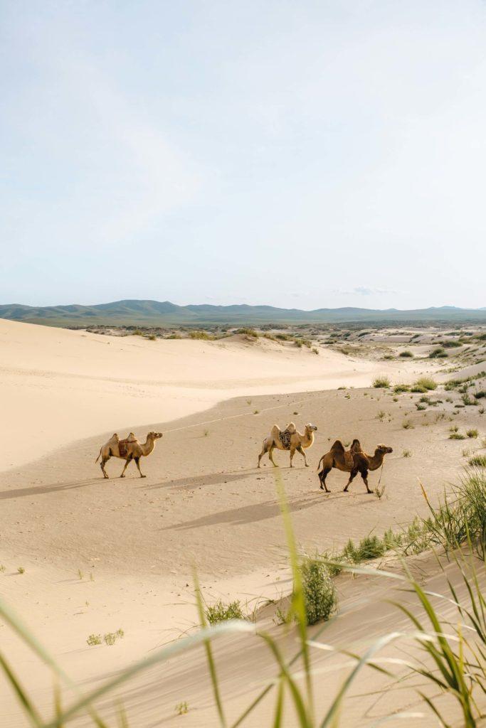 sitios de Mongolia usukhbayar gankhuyag fjCihZthrAo unsplash 1