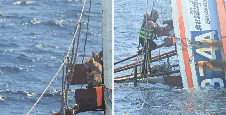 Un marinero de Tailandia logró salvar a cuatro gatos que se encontraban en un barco en llamas