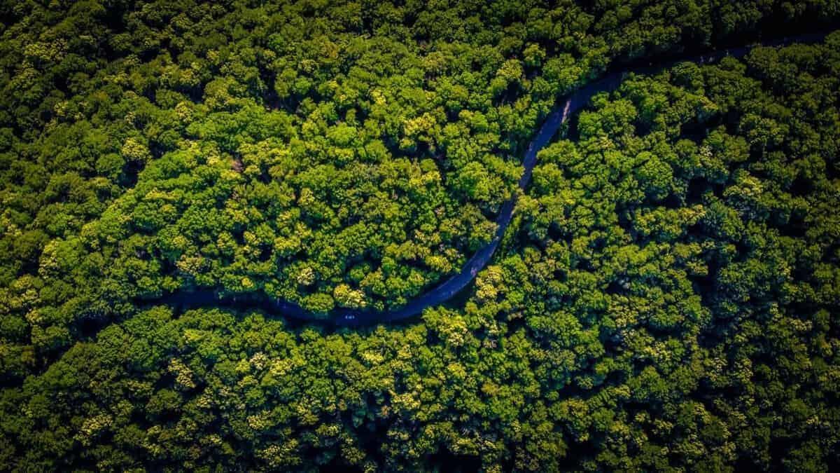 Dos tercios de los bosques tropicales del mundo han sido destruidos o dañados